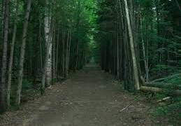 trail-trees